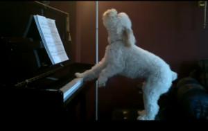 dog-singing